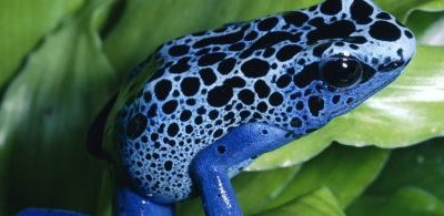 Theme of the Week – Reptiles and Amphibians